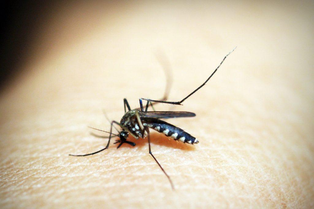 Que faire en cas d'allergie aux piqûres de moustiques ?