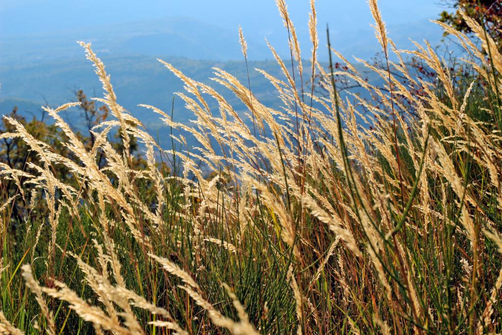 Allergies printanières : comment les soulager grâce à l'aromathérapie ?