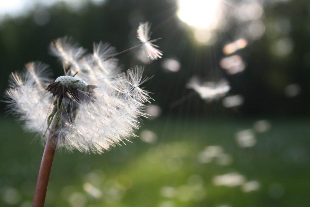 Quelle allergie en ce moment ? Protégez-vous avec le calendrier pollinique de chaque saison