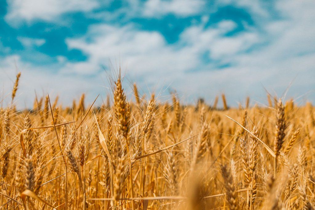 Formation agriculteur : comment devenir exploitant agricole ?