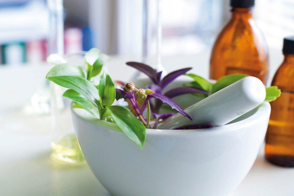 Formation phytothérapie – Comment devenir phytothérapeute ?