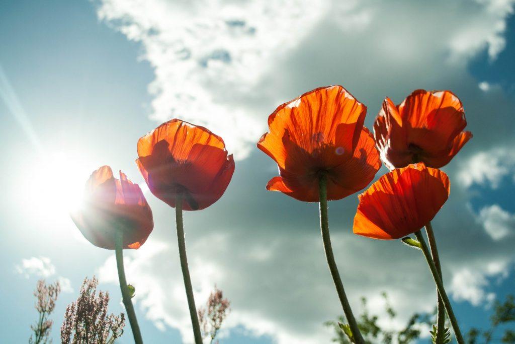 Découvrez la naturopathie vitaliste et ses principes fondateurs