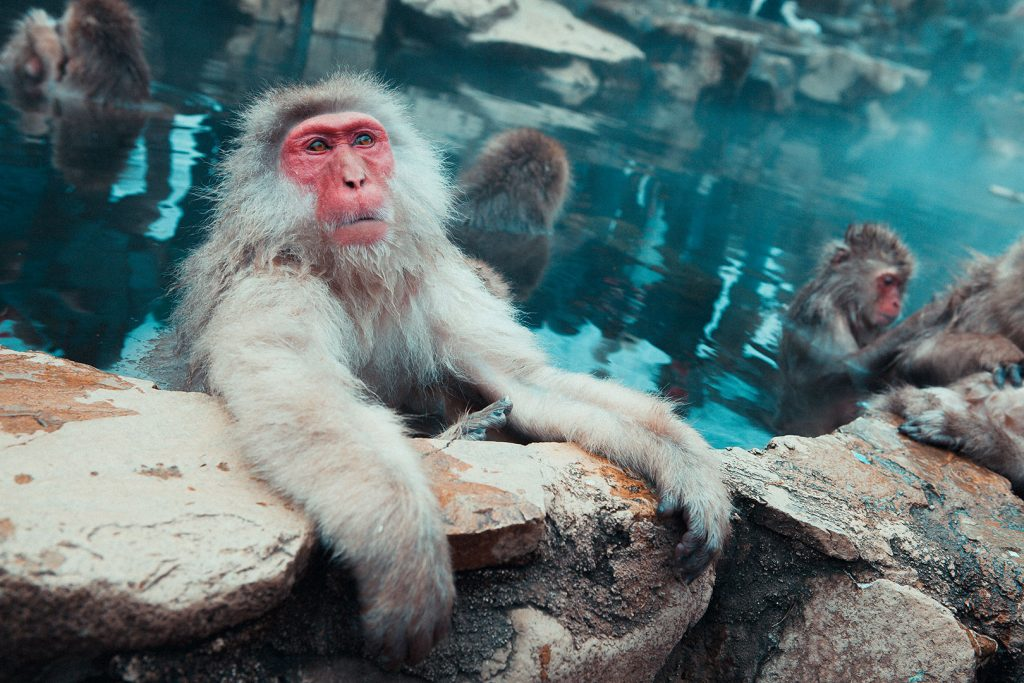 Spa, sauna & hammam : quelle bulle bien-être pour vous ?